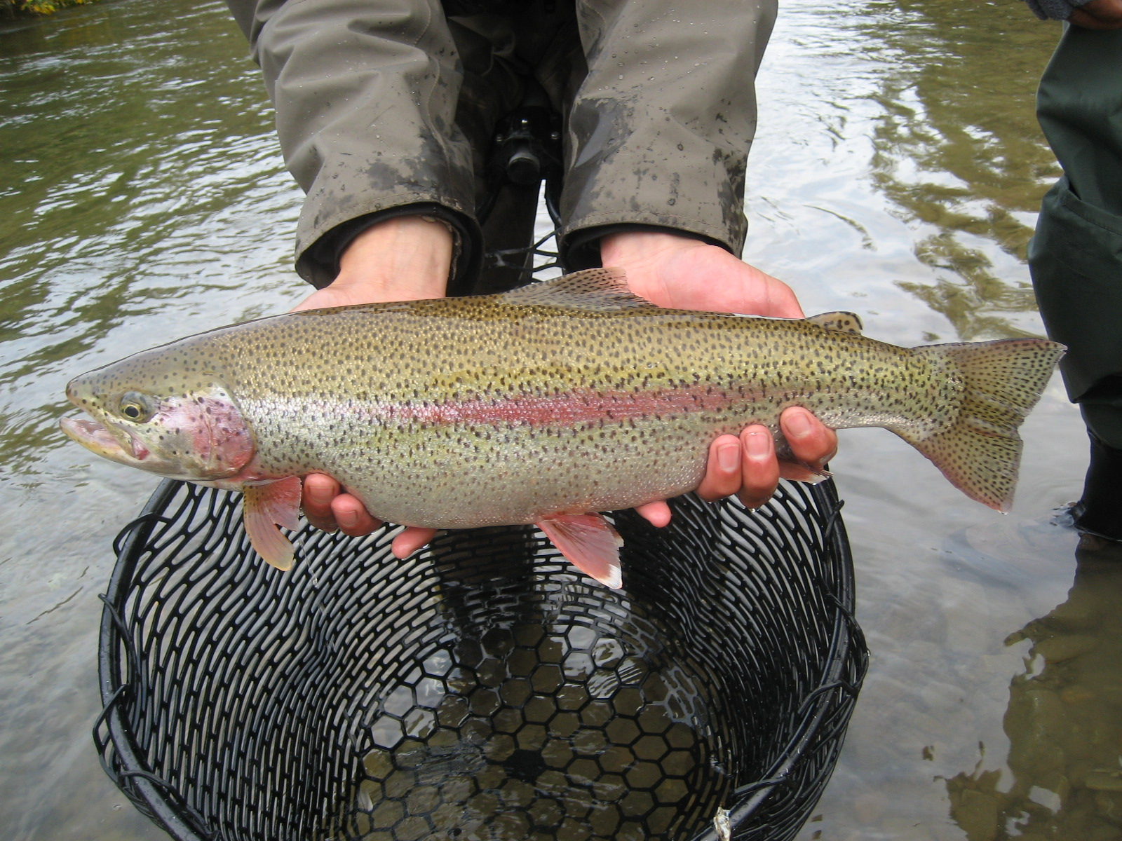 alaska fly fishing | rainbow point lodge: fly fishing lodge, Fly Fishing Bait